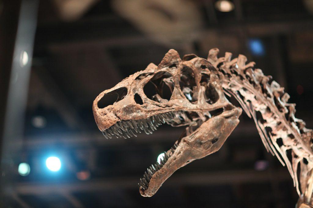 dinosaur-241962_1920-1024x683.jpg