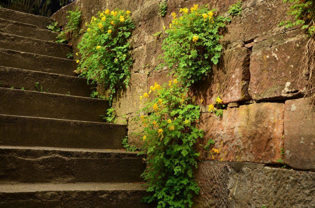 stairs-1404722_1920-1024x678.jpg