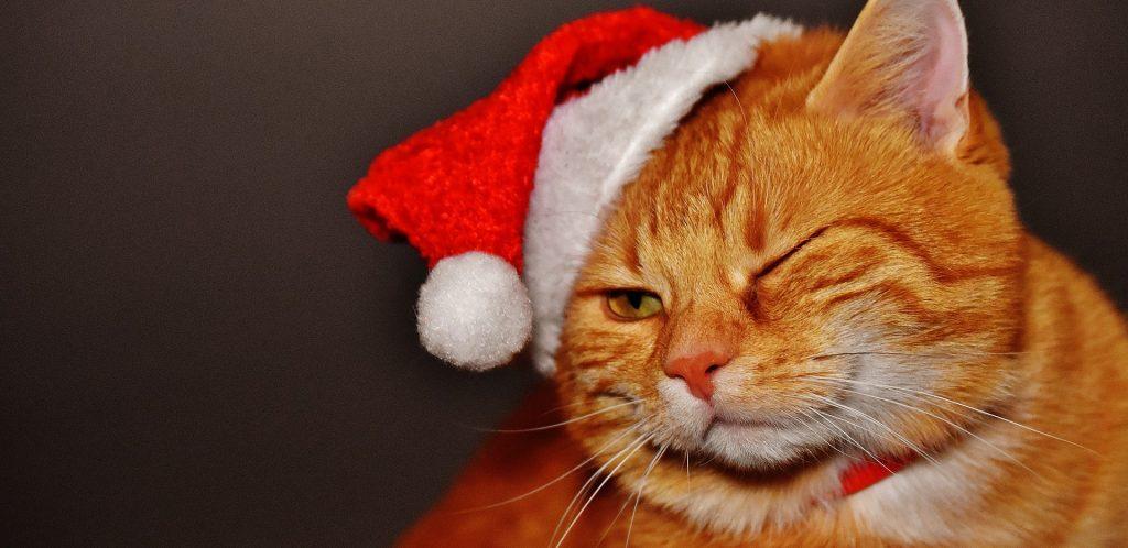 cat-1898514_1920-1024x498.jpg