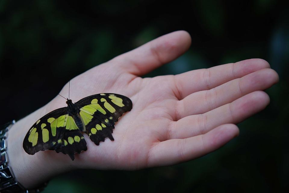 butterfly-23002_960_7201.jpg