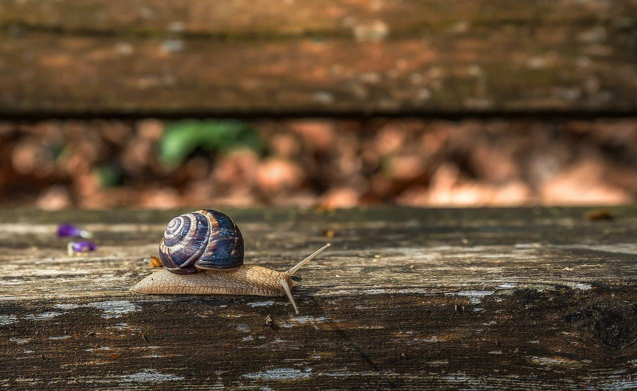 snail-4125695_1280-1280x786.jpg
