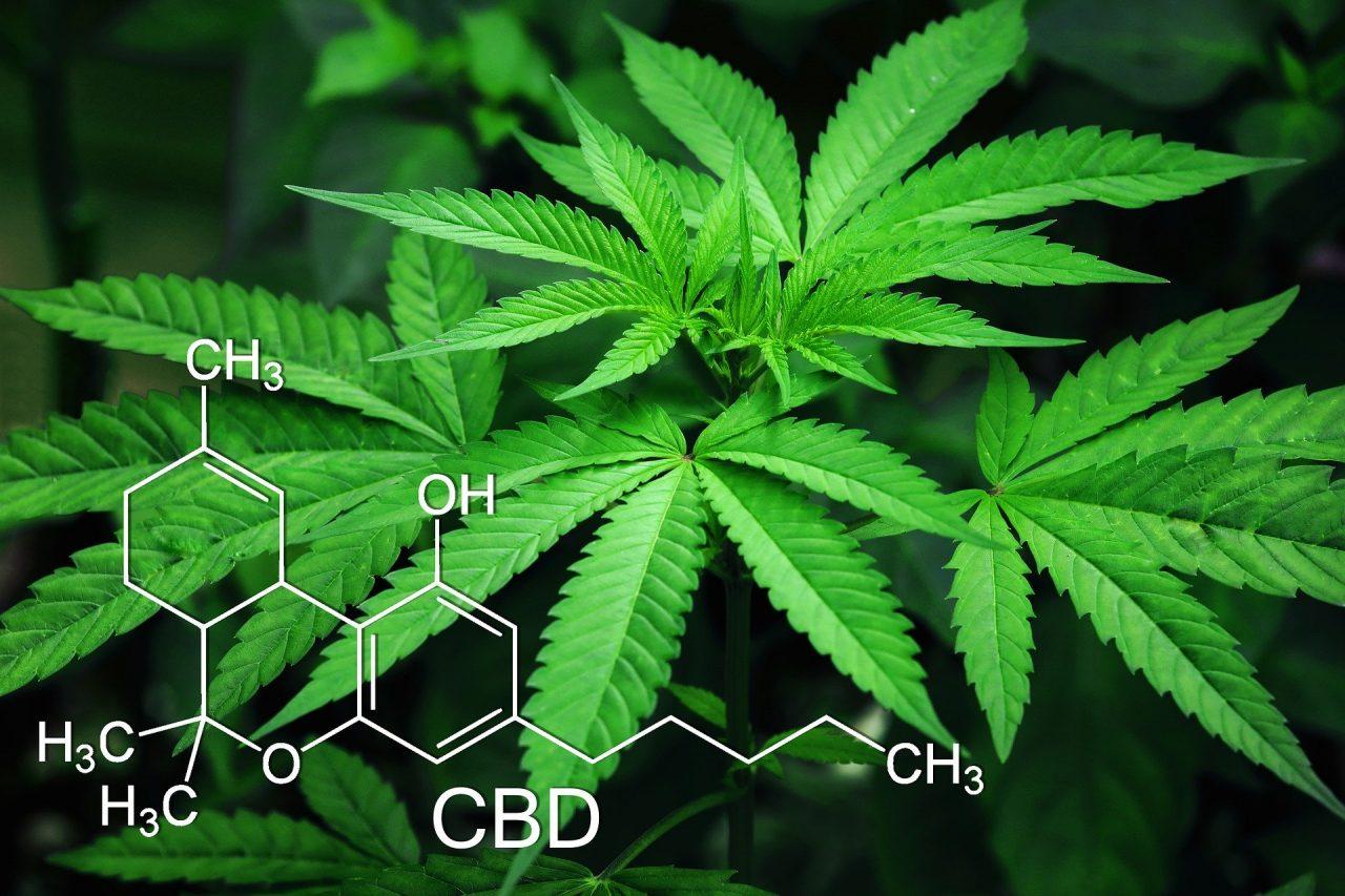 marijuana-3678222_1920-1280x853.jpg