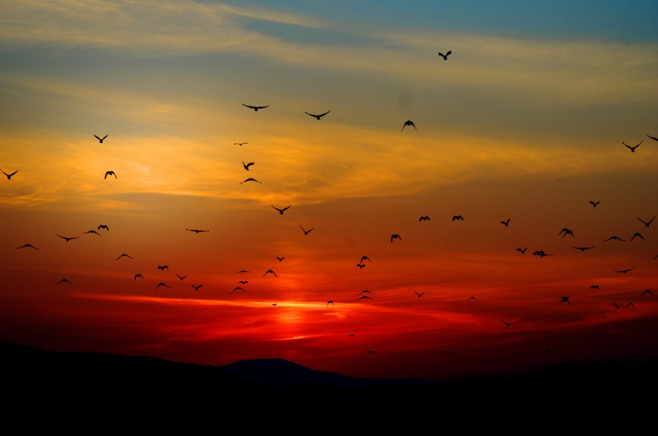 flock-of-birds-flying-above-the-mountain-during-sunset-70577-1280x849.jpg